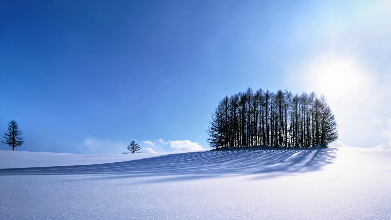 Winter landschap wallpaper met groep bomen in de sneeuw