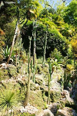 Specie esotiche nel giardino botanico di Villa Carlotta