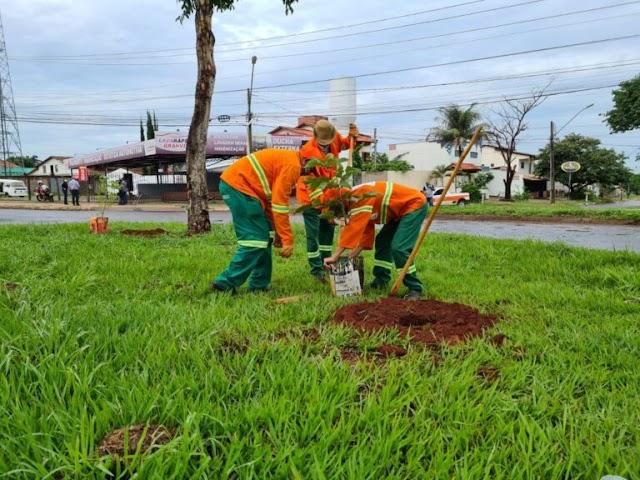 Goiânia: Comurg faz plantio de árvores para substituir jamelões