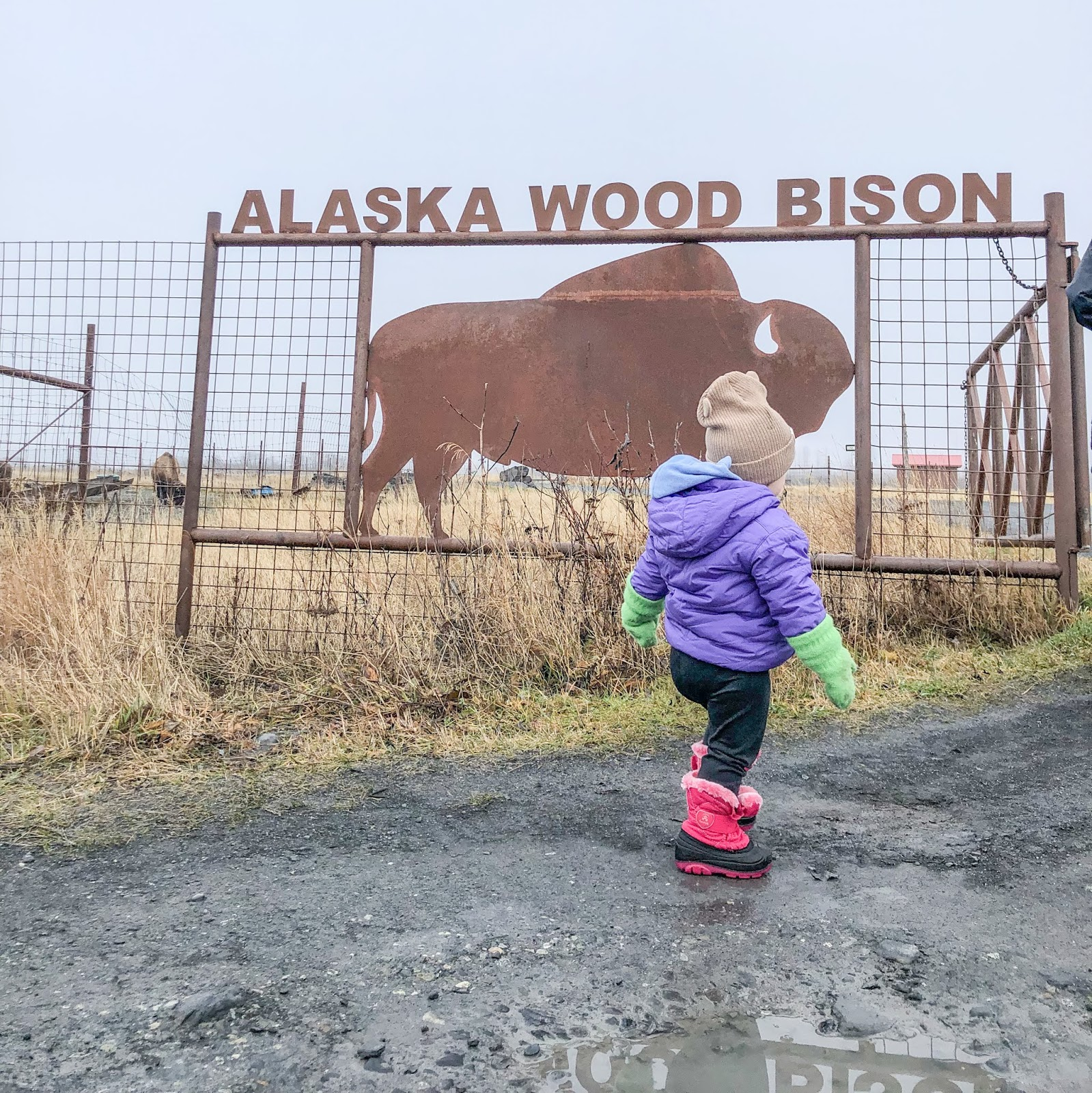 child at Alaska Wildlife Conservation Center