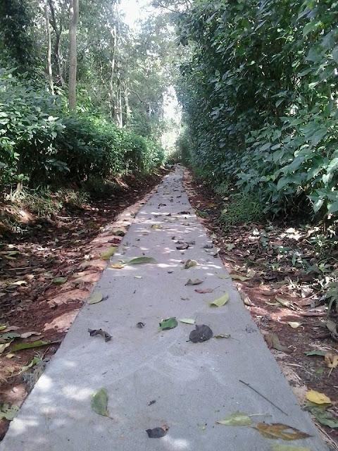 Con đường mới 3 m ngang sẽ thay thế đoạn đường do anh em trong Làng thực hiện này