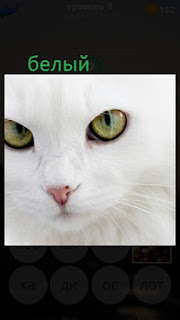 389 фото морда белого кота 9 уровень