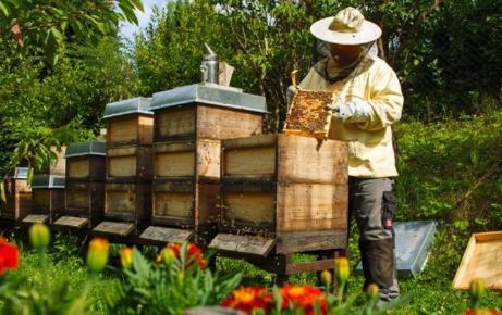Αρχίζει η διαδικασία πληρωμής λόγω πανδημίας σε χοίρο, μαύρο χοίρο και μέλι