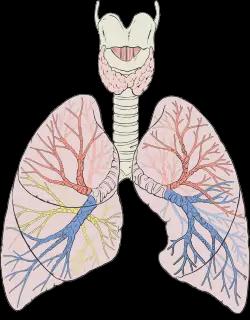 Tips Membersihkan Paru - Paru Setelah Berhenti Merokok