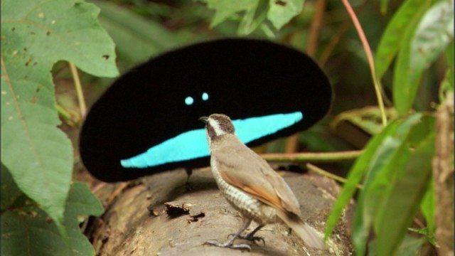 pássaro do paraíso