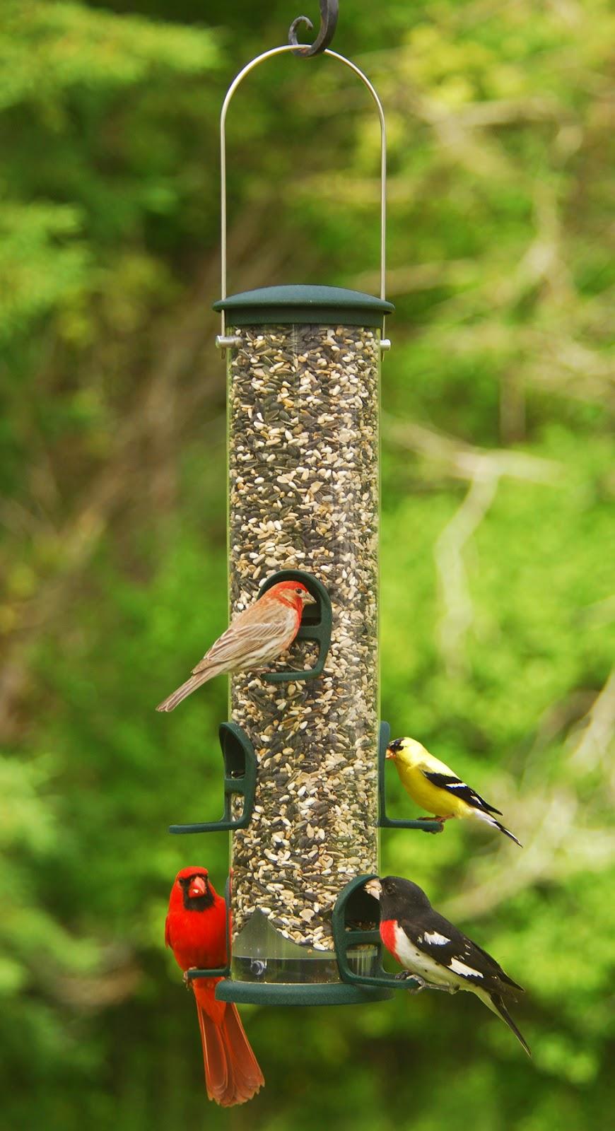 Wild Birds Unlimited: Choosing The Best Bird Seed