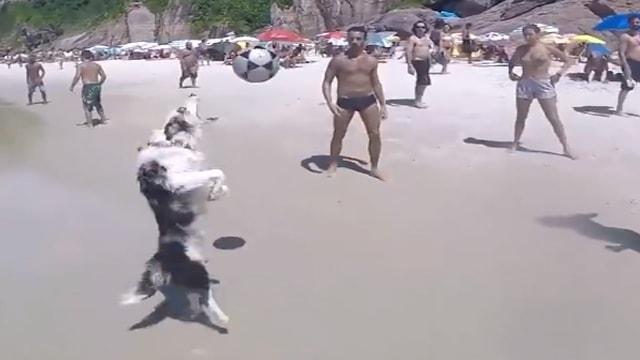 بالفيديو.. أفضل كلب يلعب كرة القدم بمهارة عالية جدا على الشاطئ!
