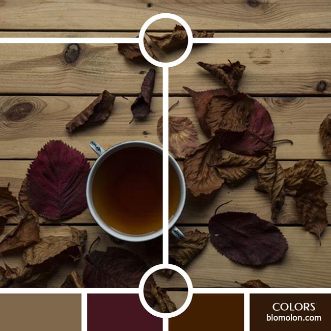 variedad_en_color_color_39