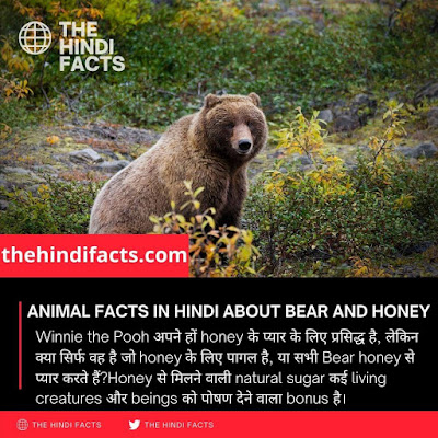 animal-facts-in-hindi-about-bear-and-honey