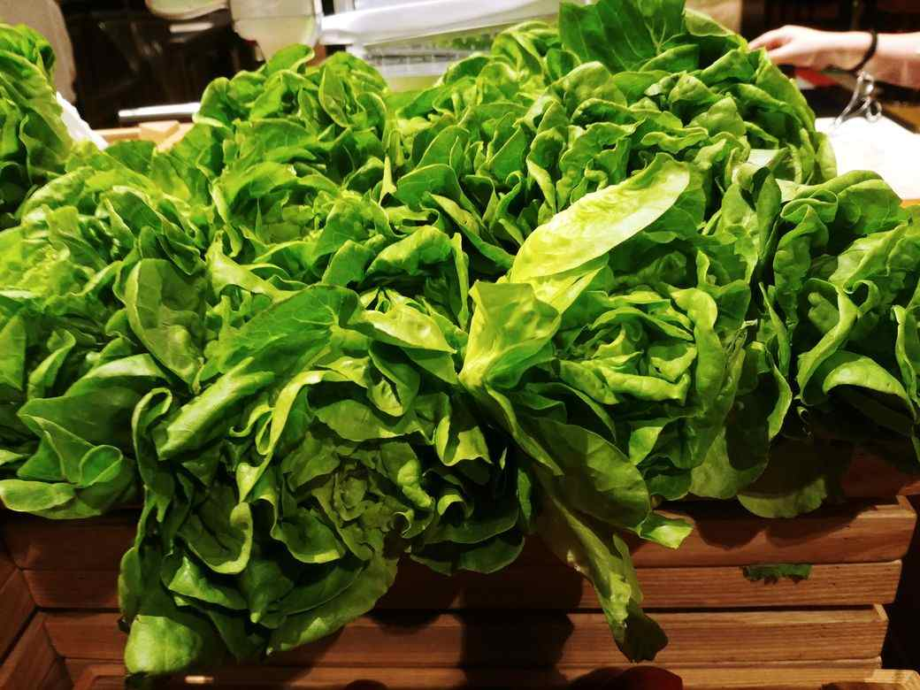 Fresh lettuce leaves at the salad station of The Grand Kitchen