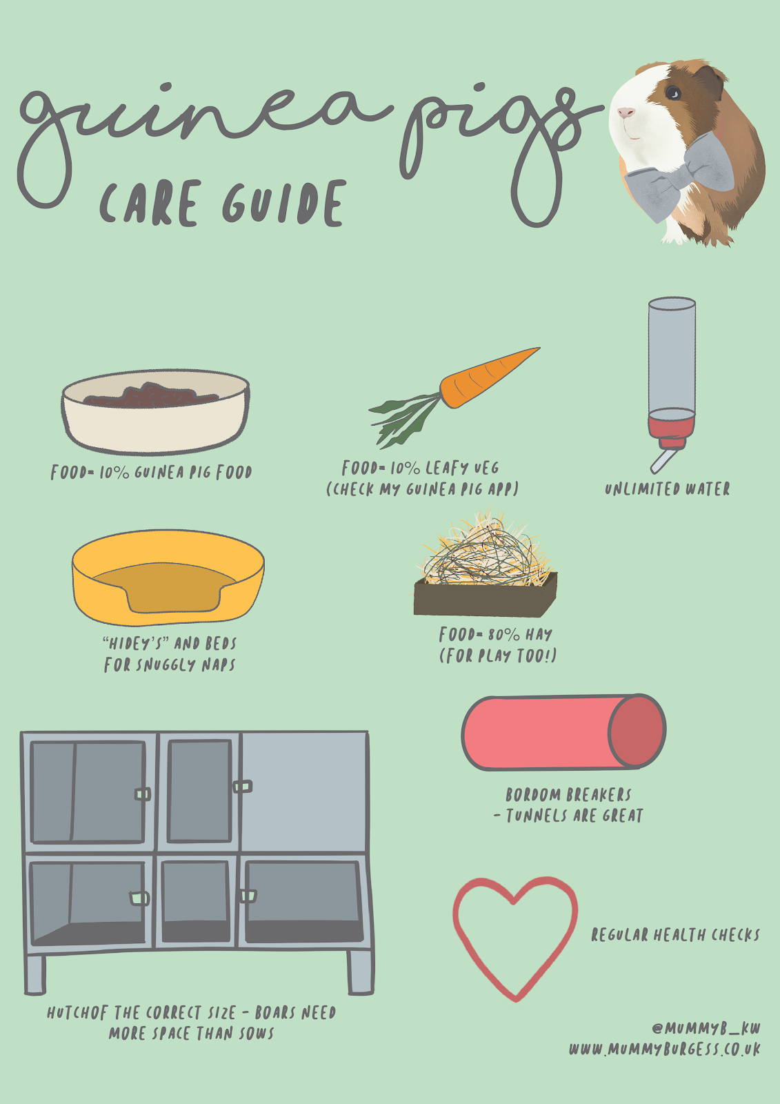 A Care Guide For Guinea Pigs