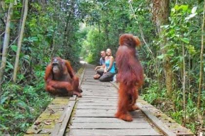7 wisata di kalimantan Tengah wajib di kunjungi
