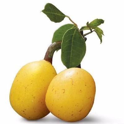 A marula ou amarula - Sclerocarya birrea