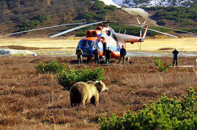 видео встреча +с медведем
