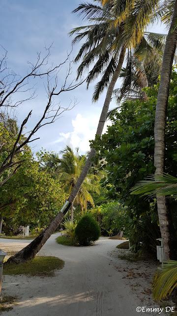 Bandos Island ~ Maldives by ©Emmy DE