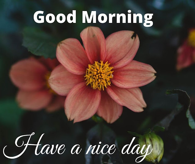 Best Flower morning pics