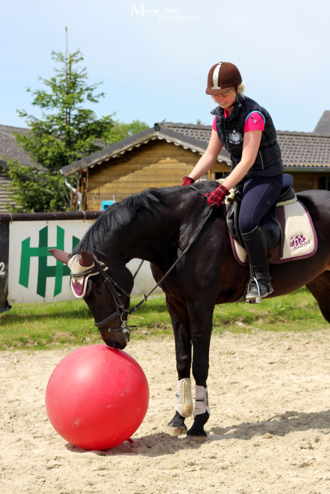 Image Result For Zitate Gluck Pferde