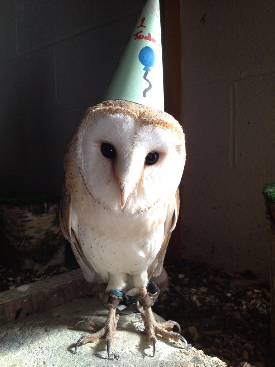 animals wearing birthday hats - photo #6