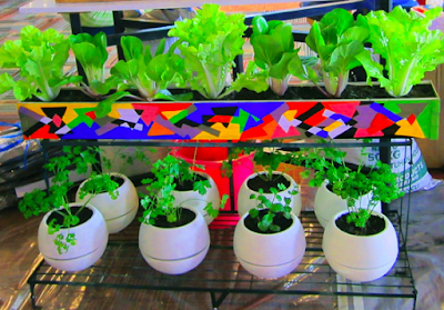 5 Usaha Pertanian Serta Peternakan Ini Dapat Beri Untung Besar