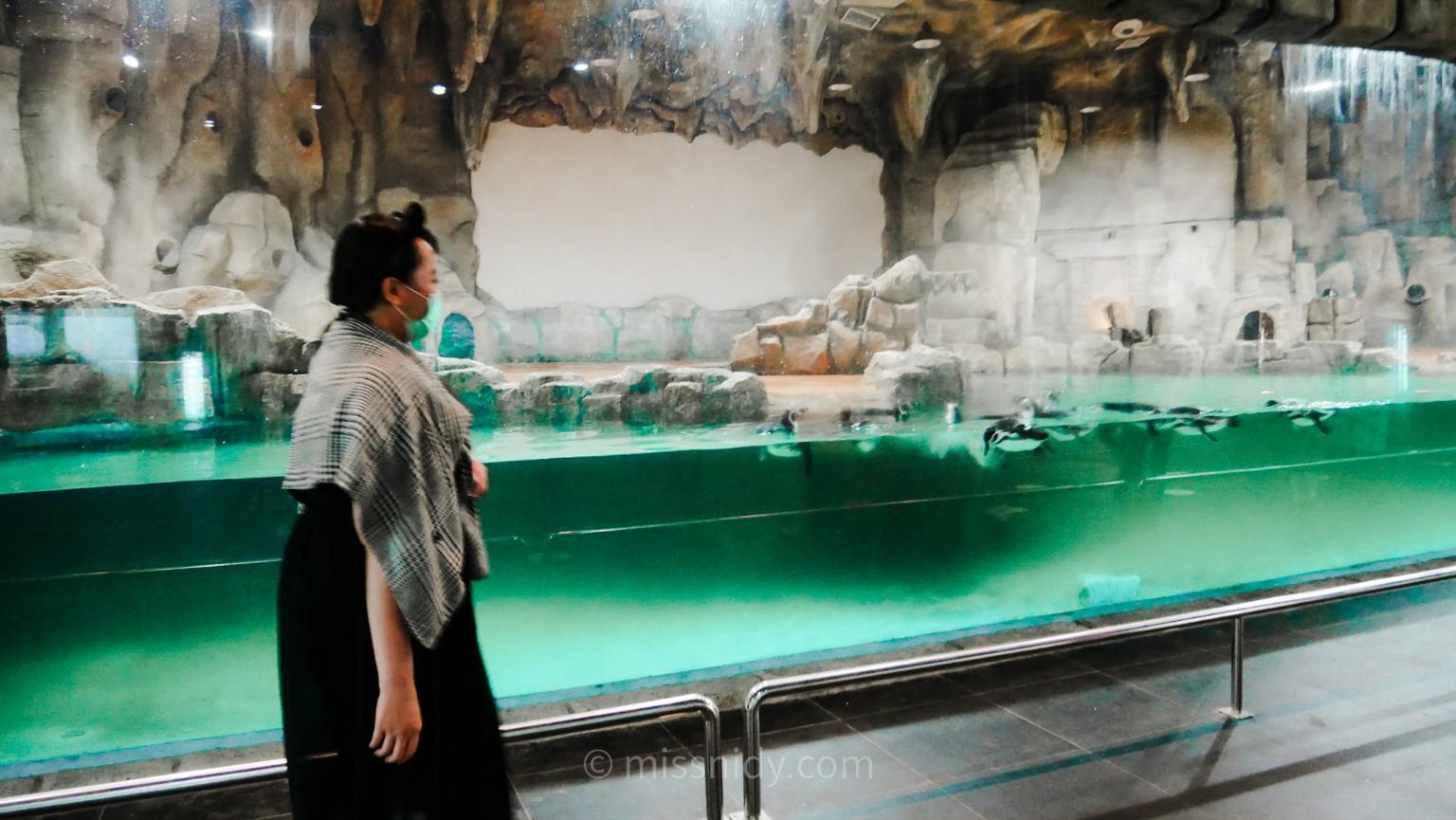 akuarium penguin di ocean dream samudra ancol