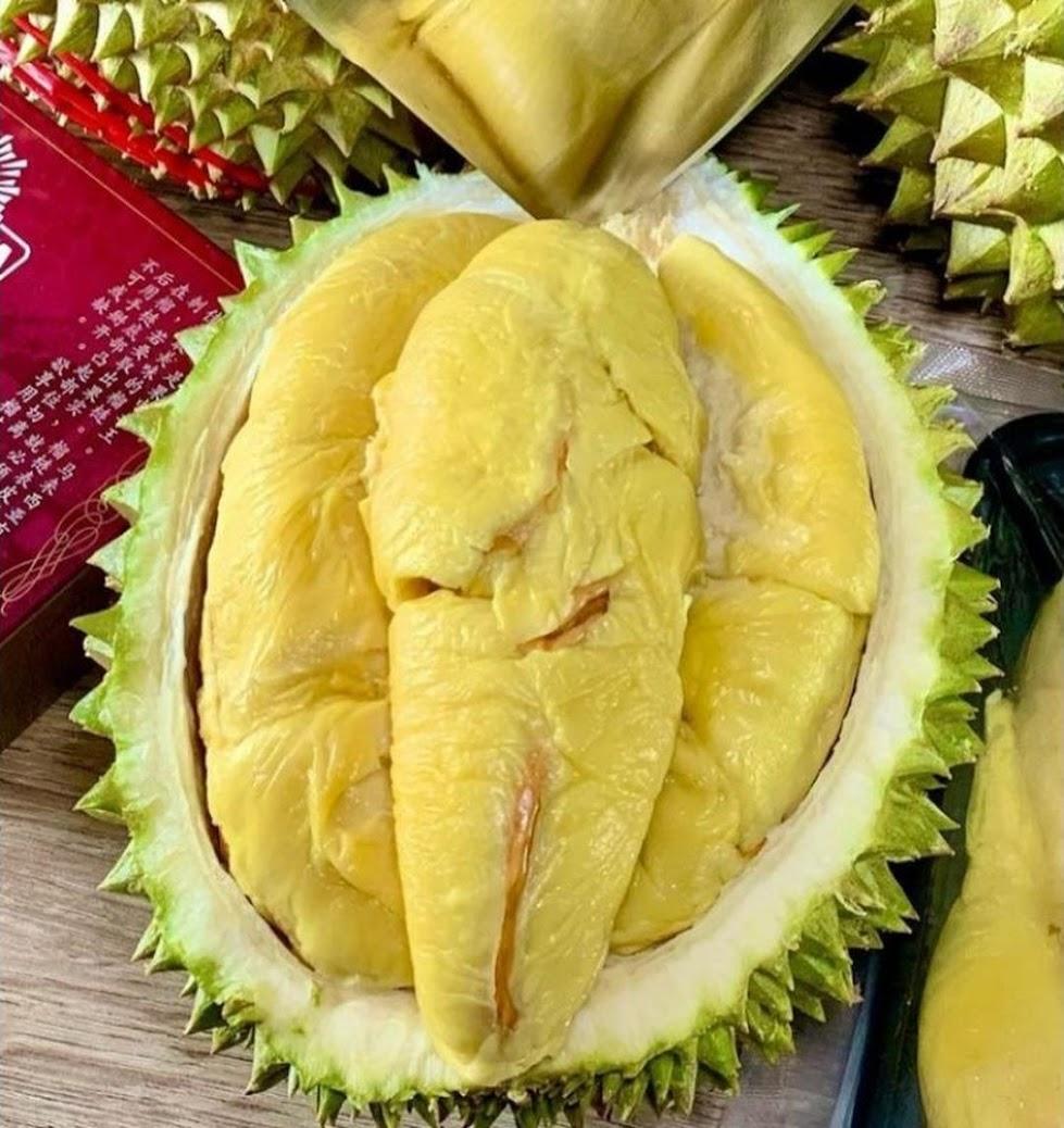 Bibit Durian Musangking super cepat berbuah Kalimantan Timur