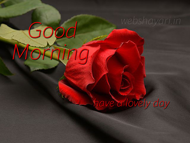good morning red rose hd wallpaper good morning images with flowers hd
