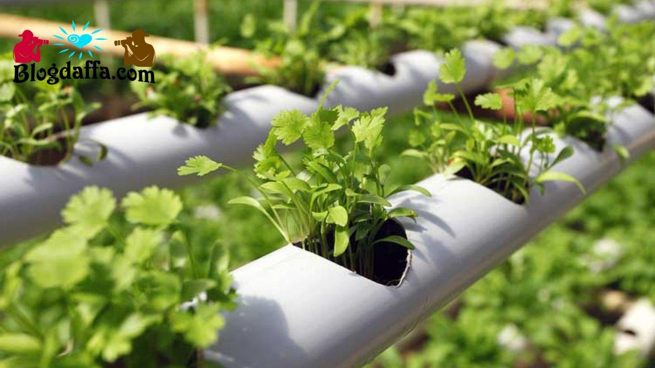 Kebun Sayur Sederhana dengan Sistem Hidroponik