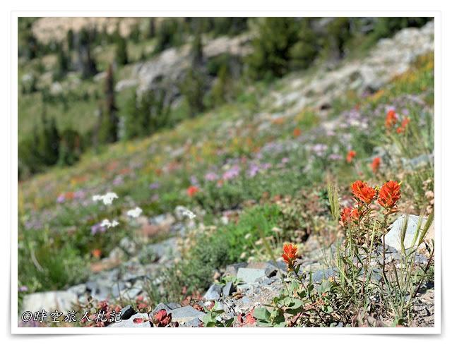 雷尼爾山國家公園Mt Rainier National Park 6