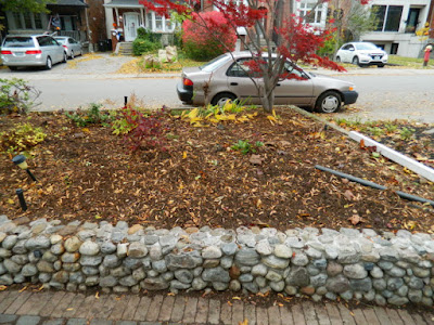 Fall Cleanup Bedford Park Front Yard After by Paul Jung Gardening Services--a Toronto Gardening Company
