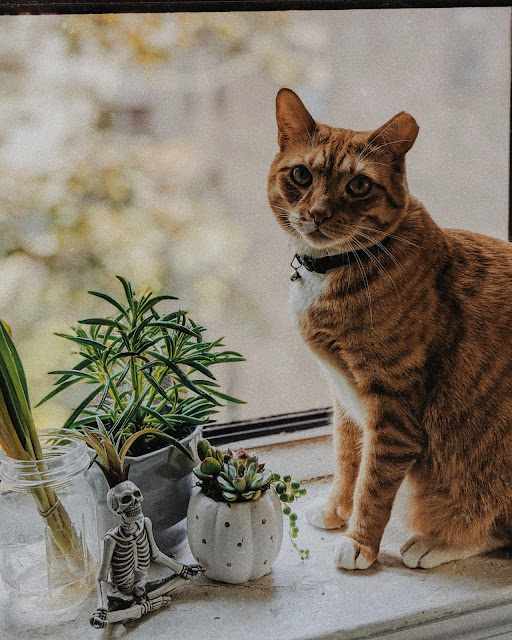 indoor plants cute cat 2020 wrap up reflections