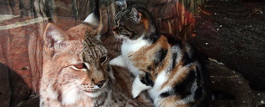 gatos felinos pets
