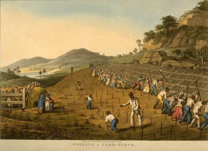 18th Century Sugar Cane Plantations