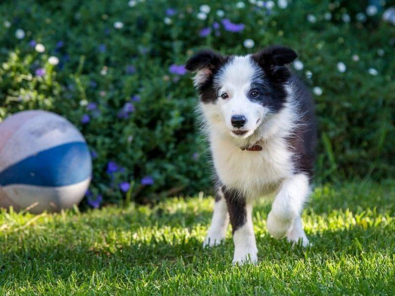 puppy Physical Development By Week