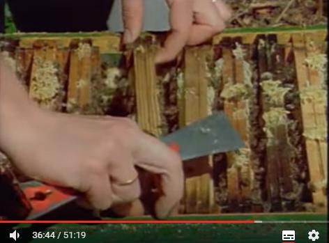Η μελισσοκομία αλλιώς: Βίντεο χάρμα οφθαλμών