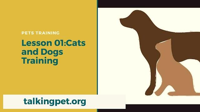 Cat And Dog Training
