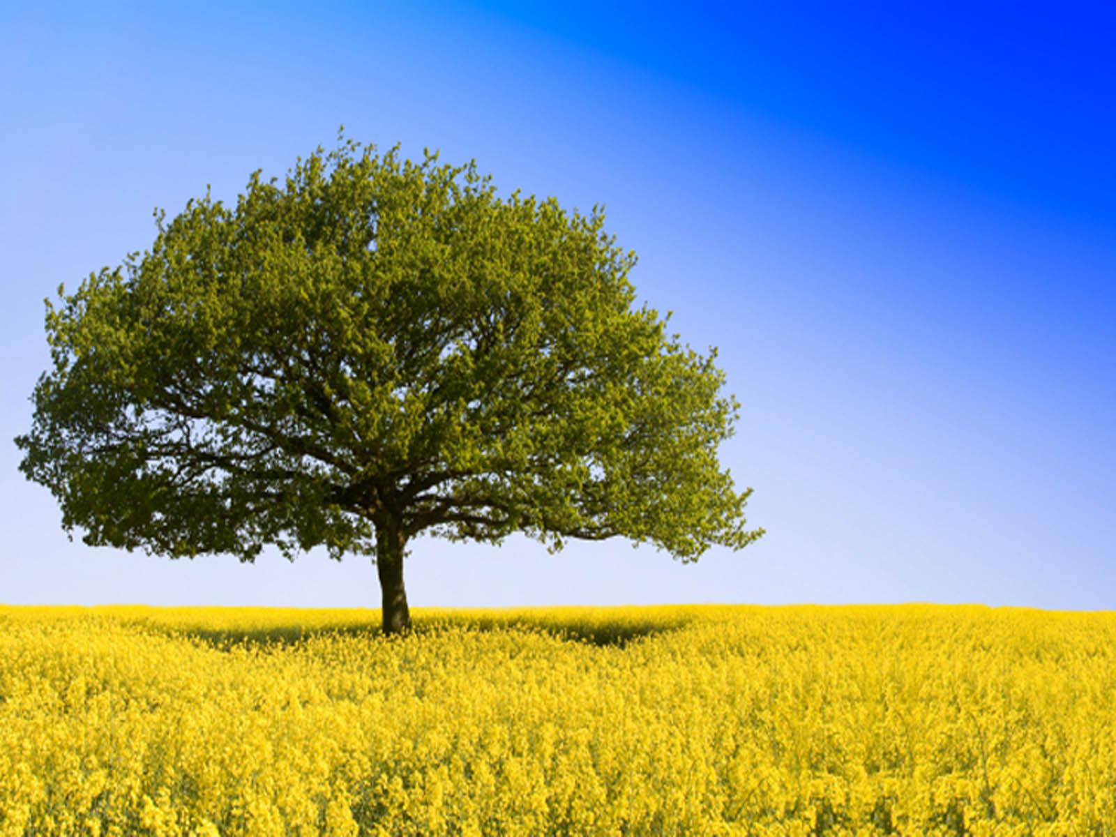 Wallpaper Tree In Field