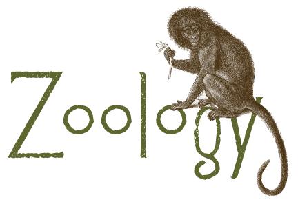 زوولوجي علم الحيوان