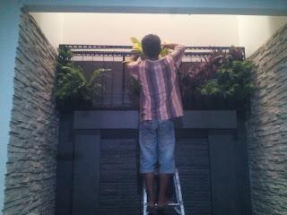 Jasa pembuatan vertical garden berpengalaman | tukang taman vertical murah | taman dinding rumah | jual tanaman hias untuk vertical garden