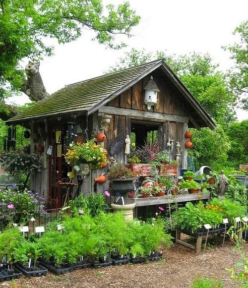 By Way Of Salem: Cottage Gardens And Sheds