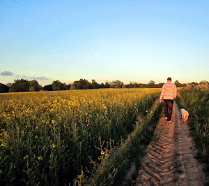 An evening walkies round yellow field