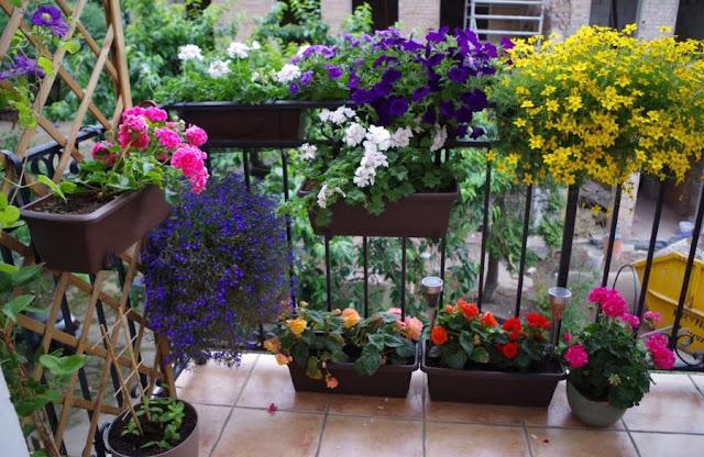 mój balkon w kamienicy, rośliny na balkonie