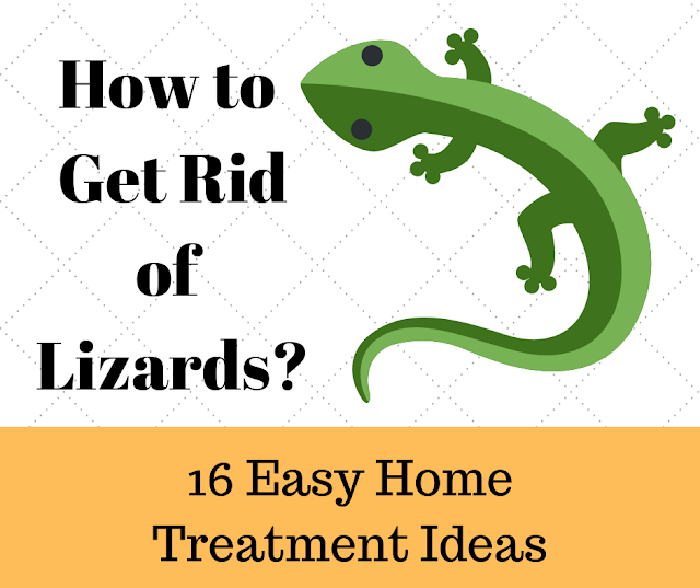 How to Get Rid of Lizards - 16 Easy Home Treatment Ideas