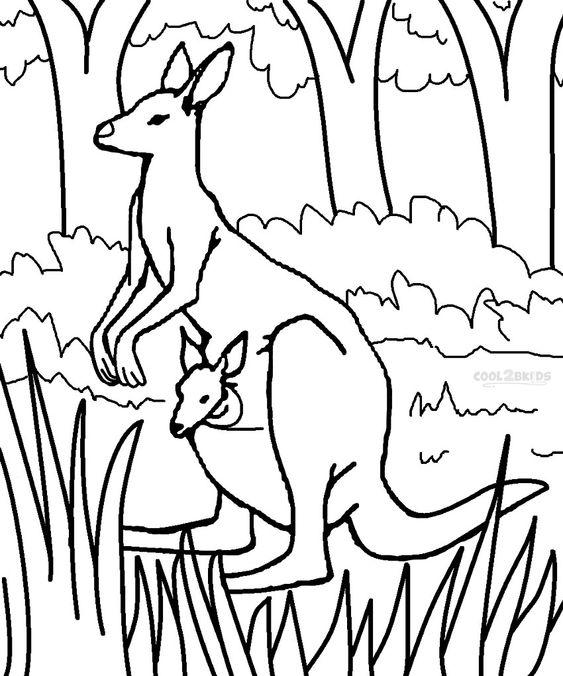 Tô màu chuột túi Kangaroo dễ thương
