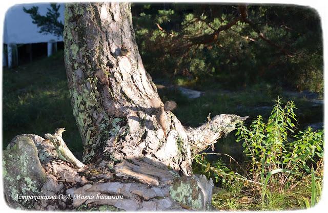 gorihvostka-ptenec-sletki