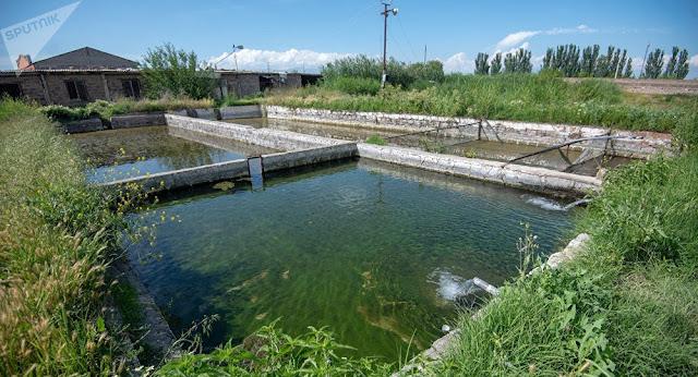 Restringen Piscifactorías en Armenia