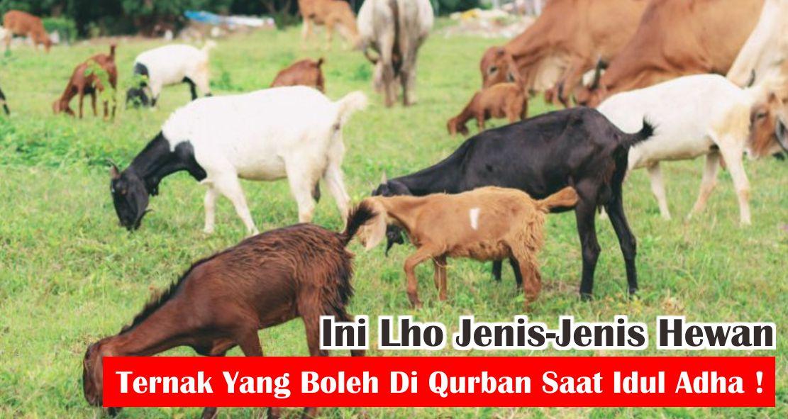 Ini Lho Jenis-Jenis Hewan Ternak Yang Boleh Di Qurban Saat Idul Adha !