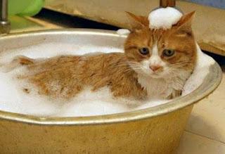 Cara Mengatasi Kucing Cacingan Secara Alami