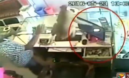Monkey steals cash from jewellery shop in Andhra Pradesh