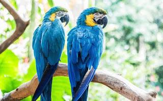 तोता के बारे में जानकारी हिंदी में ▷ some facts about parrot in hindi