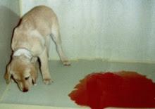 Собака больна паровирусом